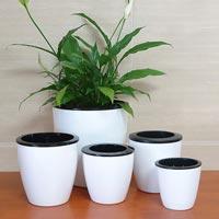 Indoor Pots