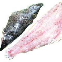 Reef Cod Fish