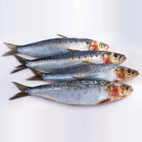 Sardine Fish In Tamil Nadu Manufacturers And Suppliers India