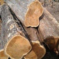 Valsadi Teak Wood