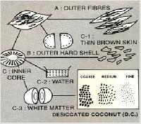 Coconut Dryer