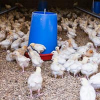 Poultry Chemicals