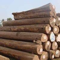 Indian Teak Wood