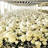 Mushroom Farming Services