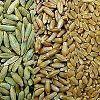 Rye Seed