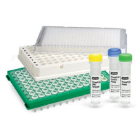 Real Time PCR Kits