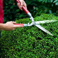 Hedging Services