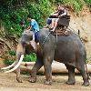 Elephant Safari Tour Packages