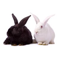 Breed Rabbits