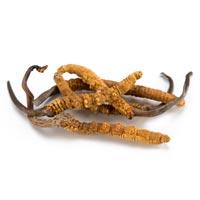 Cordyceps Sinensi