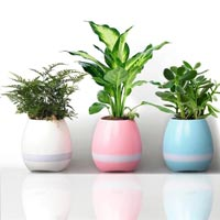 Flower Pots, Garden & Wall Planters