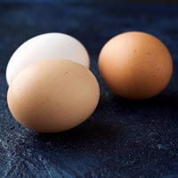 Eggs - Manufacturers, Suppliers & Exporters in India