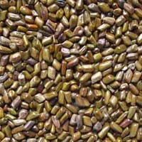 Agriculture Seed