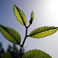 Carbon Dioxide Plant