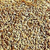 Seeds & Plant Saplings