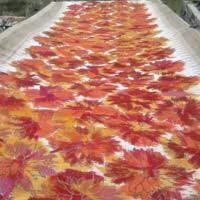 Batik Sarees