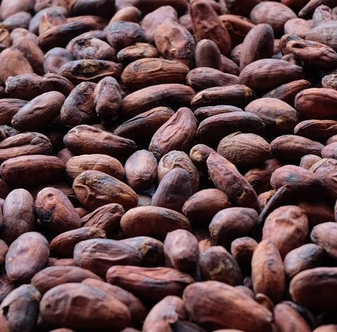 Cocoa Beans / Cocoa Powder Manufacturer in Malaysia by Singh