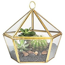 CHAIN HOUSE TERRARIUM