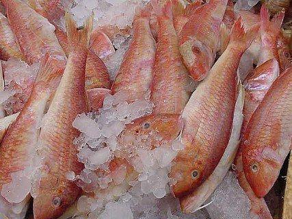 Peixe malho vermelho congelado da HBK WHOLESALES PTY LTD, peixe malho vermelho congelado | ID - 4367584