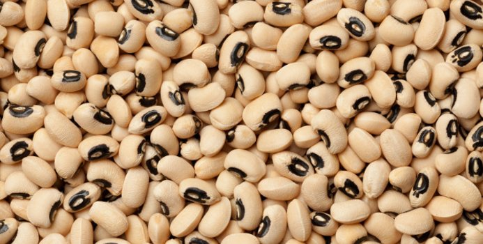 Black Eyed Beans Manufacturer In Berlin Germany By Imegas