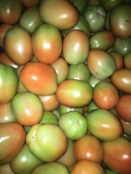 Tomato (DETOMO)
