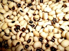 Pulses, Grains and Cereals