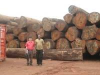 Tali Wood ,Teak Wood , Padouk, Pine, Boxwood, Azobe Wood,Doussie Round Logs, Timber Logs for Sale