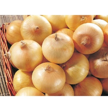 Fresh Yellow Onion (001)