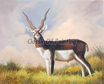 Black buck oil painting