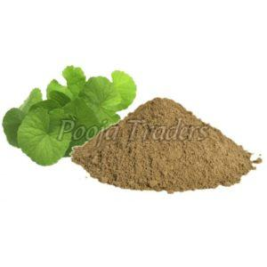 Brahmi Powder Manufacturer & Exporters from Ahmedabad, India | ID