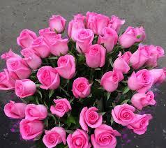 Revival Rose Flower