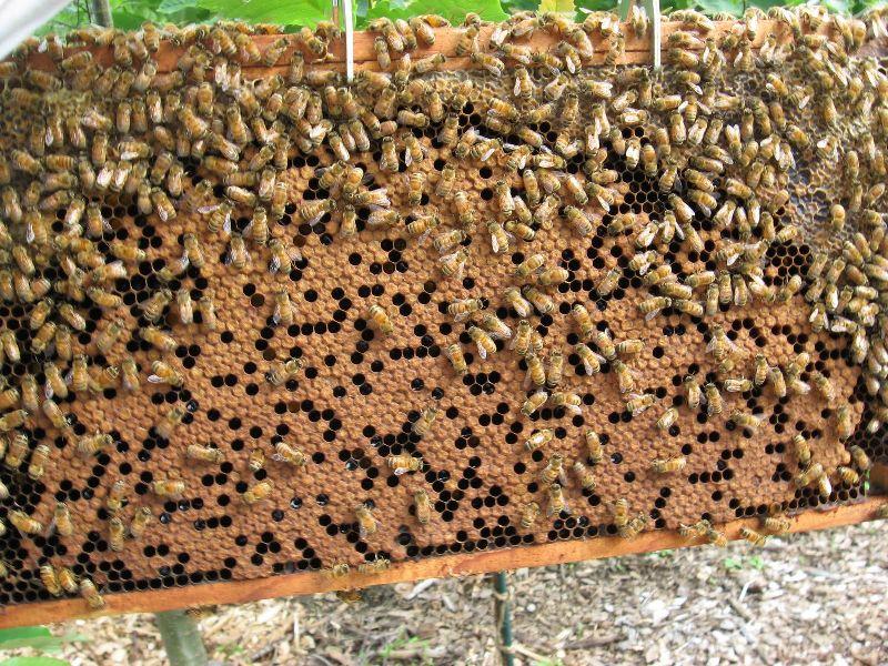 Bees Live Stocks