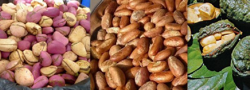 Bitter & red kola nuts
