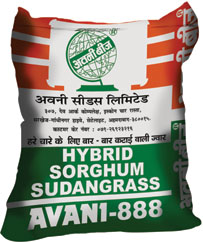 sorghum sudan grass