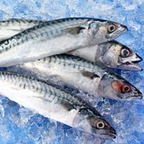 gta sea food supplier