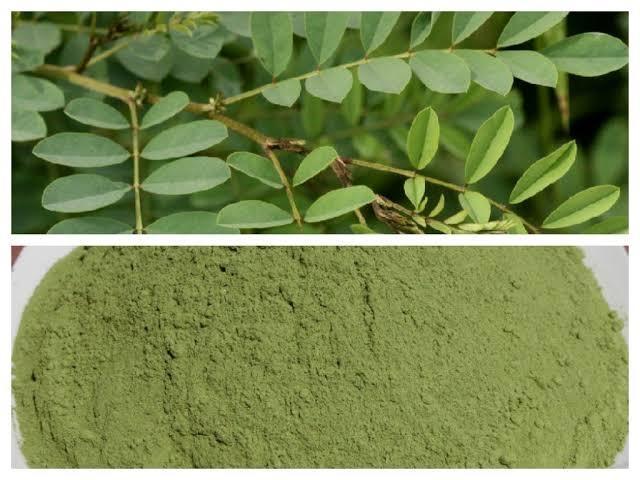 Indigo Leaf Powder
