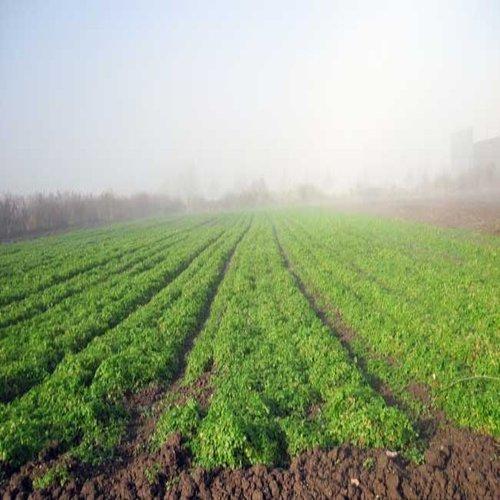 Contract Farming Services