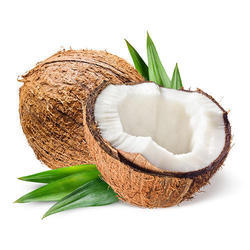 Mature Coconut Meat