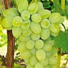 Fresh Sudhakar Green Grapes
