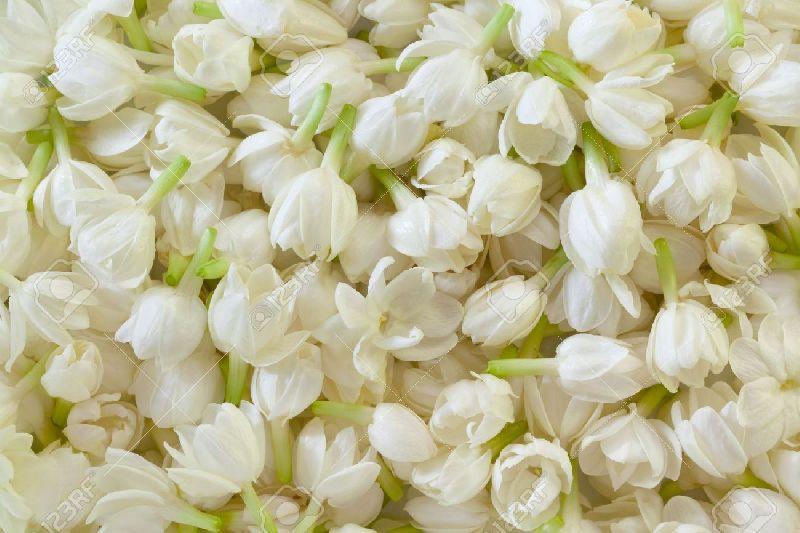 Madurai Jasmine Flower (DJ@3)
