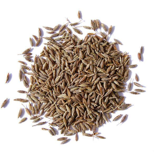 Fresh Cumin Seeds