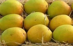 Fresh Indian Yellow Mango