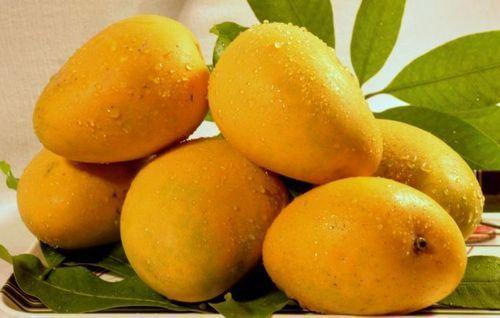Yellow Delicious Mango