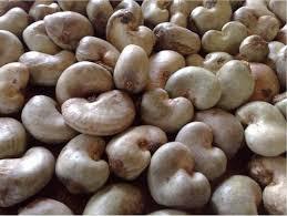 Shelled Raw Cashew Nuts