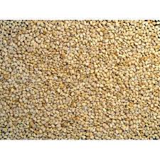 Sortex Sesame Seeds