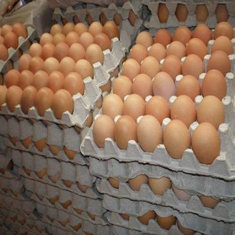 Fertile Hatching Chicken Eggs Manufacturer in istanbul Turkey by RDC Ltd. ID - 4838680
