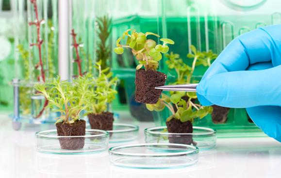Plant Tissue Culture Internship