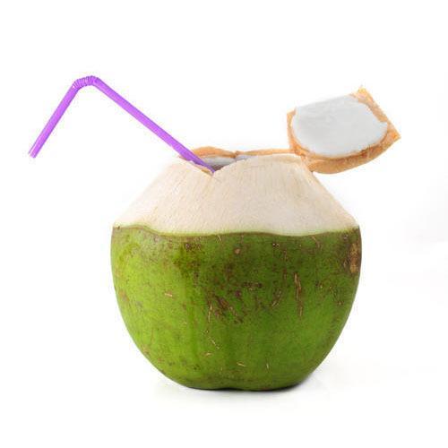 Coconut (Coconut01)