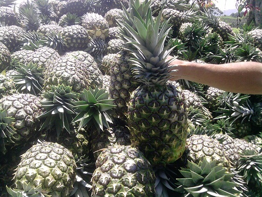 Fresh Green Pineapple