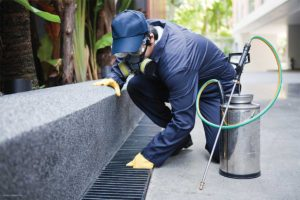 Herbal Pest Control Services (Peroxid Pest Control)
